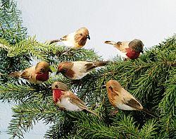 Magnet 3Pagen 6 ptáčků