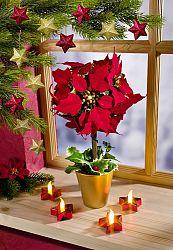 Magnet 3Pagen LED vánoční hvězda v květináči