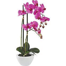 Rostlina Umělá Maire